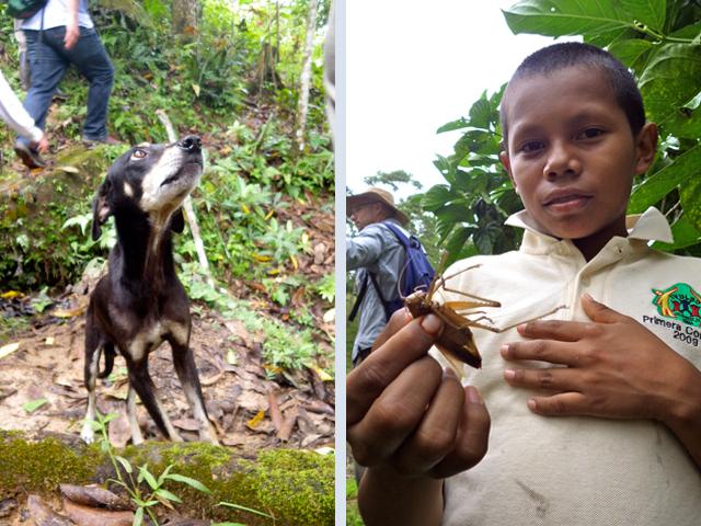 Panama Dog
