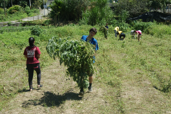 Br. Matthew Lambert hauls a load of freshly-pulled weeds.