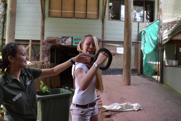 katie kohler snake internship in australia