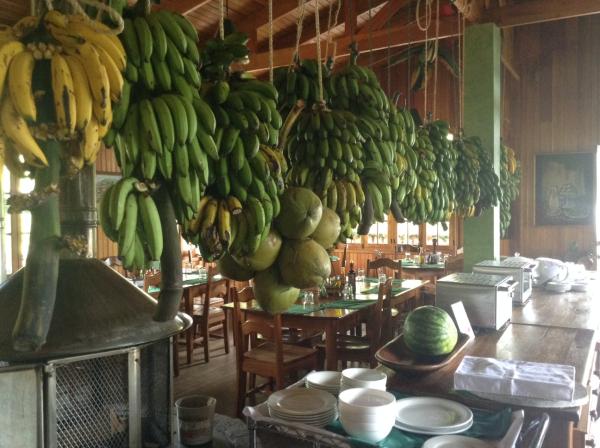 Bananas in Panama